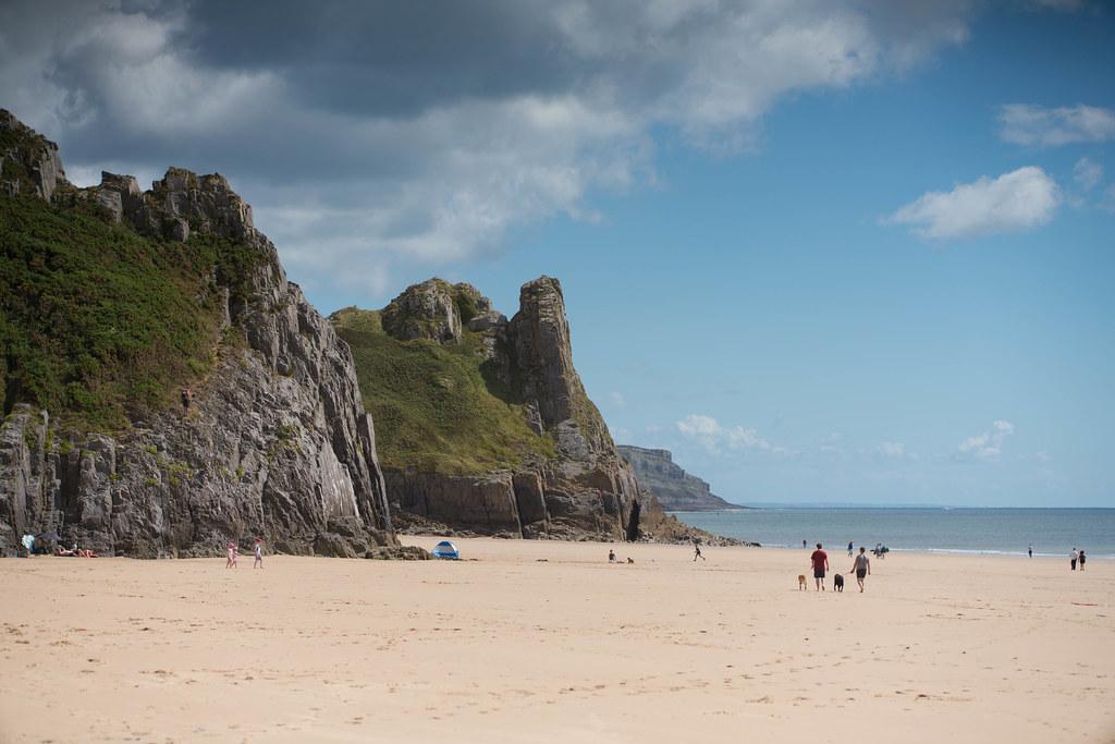 Swansea Beach Dogs