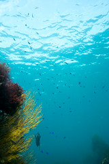 20150905-DSC_2924.jpg (d3_plus) Tags: sea sky fish beach japan scenery underwater diving snorkeling  shizuoka    apnea izu j4  waterproofcase    skindiving minamiizu       nikon1 hirizo  1030mm  nakagi 1  nikon1j4 1nikkorvr1030mmf3556pdzoom beachhirizo misakafishingport  1030mmpd nikonwpn3 wpn3