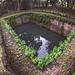 large laterite pond