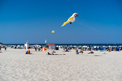Last summer day, beach and bird