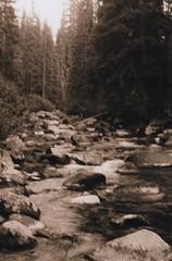 Lostine River 8, 2015 (Sara J. Lynch) Tags: trees white black lynch film water oregon forest 35mm river j blurry rocks sara eagle asahi pentax k1000 corridor cap flowing wilderness wallowas lostine