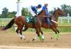 "2015-08-23 (16) r1 David Amiss on #5 Peter's Creek (JLeeFleenor) Tags: photos photography md marylandracing laurelpark jockey جُوكِي ""赛马骑师"" jinete ""競馬騎手"" dżokej jocheu คนขี่ม้าแข่ง jóquei žokej kilparatsastaja rennreiter fantino ""경마 기수"" жокей jokey người horses thoroughbreds equine equestrian cheval cavalo cavallo cavall caballo pferd paard perd hevonen hest hestur cal kon konj beygir capall ceffyl cuddy yarraman faras alogo soos kuda uma pfeerd koin حصان кон 马 häst άλογο סוס घोड़ा 馬 koń лошадь bay maryland"