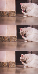 Photoshoot 15 (Priscila Barros -) Tags: new family portrait cats baby pets cute love beautiful animal animals brasil riodejaneiro cat canon happy photography j day photos amor gatos linda gata animais brancas animaldeestimação