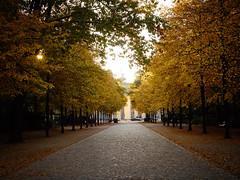 Autumn in Berlin (Alexey Subbotin) Tags: autumn berlin 1240mm olympusomd olympusmzuiko