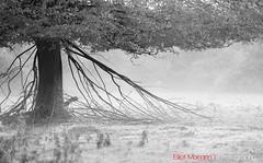 Hatfield_Forest-47 (Eldorino) Tags: park uk morning autumn trees nature forest sunrise landscape countryside nikon britain centre jour hatfield bishops stortford essex hertfordshire stanstead hatfieldforest
