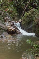 Gunung Panti Forest Reserve, Kota Tinggi, Malaysia (tik_tok) Tags: forest river outdoors asia stream hiking jungle malaysia johor kotatinggi gunungpantiforestreserve