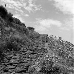 Path to the Volcano (Stromboli, Summer 2016) (Federico Pitto) Tags: bw stromboli yashicamat124 yashinon80mmf35 rolleirpx400 d76