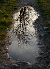 DSC_0613 (luca.cadez) Tags: albero capezzagna luoghi pozzanghera riflesso stradina