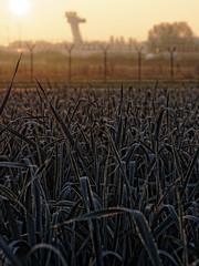 Winterlauch (carajosa) Tags: flughafen nrnberg lauch planzen morgentau knoblauchsland