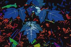 El bosque azul (seguicollar) Tags: airelibre photomanipulación imagencreativa virginiaseguí