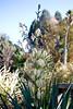 Cactus Garden (alexispadilla) Tags: california travel flowers nature garden berkeley bayarea universityofcaliforniabotanicalgardenatberkeley