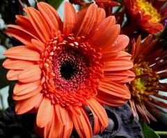 2100e2x  P900  gerbera face (jjjj56cp) Tags: flowers orange closeup petals anniversary details blossoms center p900 gerbera daisy bouquet blooms orangegerbera anniversarybouquet jennypansing