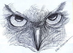 buho a lapicero (ivanutrera) Tags: bird animal pen sketch drawing ave pajaro draw dibujo ilustracion lapicero boligrafo dibujoalapicero dibujoenboligrafo