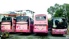 I want you! (rnrngrc) Tags: auto bus del 1 long king phi florida body space philippines transport 1999 line motors corporation ii valley works series motor monte hyundai hino ls cubao inc gd cagayan aero laoag generic pilipinas marcopolo 171 rm gv d6 cvl 2015 p11 sampaloc i q300 gvf dmmc gd92 hmpc p11c gd98 rm2p d6ab dm14 xml6127 d6a dmmw xmq6129 p11cth grandecho kmjrj18bp rm2pss gvfti gd106 gvfbb kmjrj kmjrj18bpxc