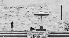 @ Varanasi, UP (Kals Pics) Tags: life people blackandwhite india man history monochrome animals blackwhite steps goat varanasi colorless legend holyland myth ghats roi morningwalk kasi cwc sati uttarpradesh banares ancientcity lordshiva manikarnika annapoorani rootsofindia kalspics chennaiweelendclickers