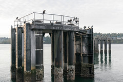 _DSC3141 (marilynwe) Tags: 2016 edmonds washington ferrylanding kingston sunrise water ferry