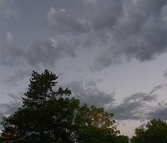 PA190277 (Paul Henegan) Tags: clouds dawn earlymorninglight trees
