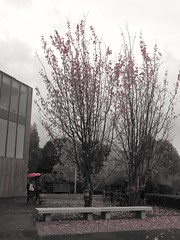 2016-10-21_07-29-05 (emielelabes) Tags: trees red