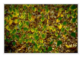 Autumn 4 NM