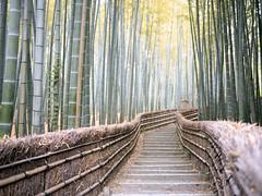 Bamboo groove (soho42) Tags: mamiya645protl japan bamboogroove bamboo kyoto kodakportapro400