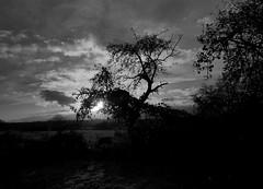 The Field (chicitoloco) Tags: the field wald wiese waldwiese acre acker felder baum sunset sonnenuntergang