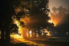 Eaton Park (Norwich) 30/10/16 (Matthew Dartford) Tags: norwich atmospheric bokeh eaton eatonpark fog foggy forest happisburgh mist night nighttime norfolk spooky tree treeline wood woodland