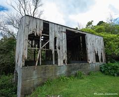 Forgotten (leah-nz) Tags: rural farm barn shed borer decay broken derelict deathwatch beetle unused holes