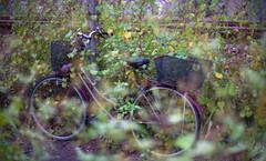 Lr-222 (m_yuuta25) Tags: filmphotography film fm3a 50mm