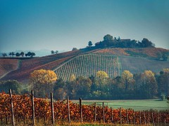 Colline autunnali (erripollo) Tags: erripollo enricopollone ngc em5markii omd olympus agricoltura luci natura light nature landscape season stagioni colori colors color sky rural colline wine vino asti italia italy autumn autunno
