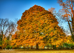 Maple Bell (Terry Aldhizer) Tags: maple bell tree autumn fall wasena park roanoke evening sunset shape terry aldhizer wwwterryaldhizercom