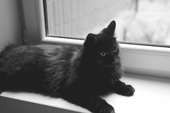L1000501 (whitedeadly) Tags: leicaq iso 2500 cat test bw natural light black