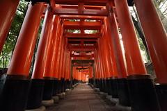Inari Shrine (Teruhide Tomori) Tags: 伏見稲荷大社 京都 神社 torii 鳥居 日本 fushimiinari shrine kyoto japan tradition red japon