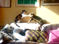 """Amor de gatos"" (atempviatja) Tags: casa mascotas gato descanso sof interior amor gatos"