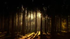 Enter my Dreams (Bokehschtig (ON/OFF)) Tags: forest wald trees treemendous forestscape light sunlight sunset soil duff germany deutschland bavaria bayern dster haunted shadows nature raysoflight rays sunrays sunbeam sunstar sony sonya7 sonya7m2 sonya7ii sigma sigmaart2414 24mm
