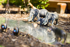 Watering Hole (PhilPhotosity) Tags: elephant nature alive water thirsty naturelovers miniature dof deptth depthoffield models toys funny