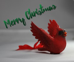 Merry Christmas message.  Available for purchase on Shutterstock (CCphotoworks) Tags: ccphotoworks shutterstock stockphotos christmascards cards greetings christmas winter redcardinal