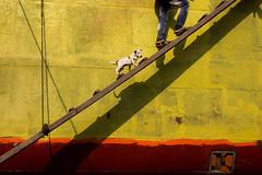 Untitled (Md Enamul Kabir) Tags: artlibres littledoglaughednoiret