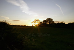 Sunset (Jo_Morley) Tags: sun sunset sunny sunshine england uk unitedkingdom united kingdom trees tree green sky photoshop photography field britain cloud clouds landscape bright light watermark outdoor outside environment horizon sony leyland