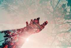 What Completes You? (thomas_anthony__) Tags: canon a1 film 35mm analog purple lomochrome lomochromepurple lomography hand silhouette tree trees branches plants leaves autumn sky sun flare light lens reaching double exposure multiple doubleexposure red blue dream