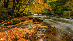 Swirling Leaves. (MNM Photography 2014) Tags: autumn autumncolours autumnal colourful colours leaves orangeleaves beech trees beechtrees swirlingleaves swirl flow flowingwater riverroe roevalley roevalleycountrypark clear water stones rocks moss longexposure movement seasons limavady countyderry northernireland ireland ulster canon canon5dmkiii leefilters lee leelandscapepolarisingfilter canonef1740mmf4lusm