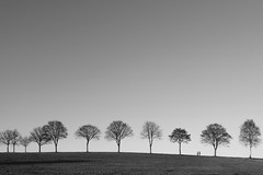 Wintersparziergang (Werner Schnell Images (2.stream)) Tags: ws baum bume tree trees wintersparziergang natur