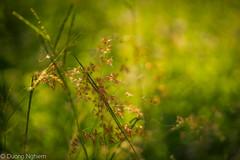 Green memories... (tuanduongtt8018) Tags: