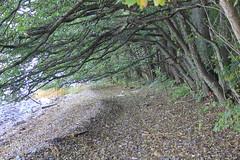 Norway18 (Detlef Klein) Tags: seascape beach oslo moss walk gods fjord refsnes