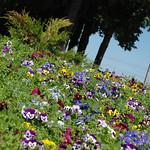 Цветочное thumbnail