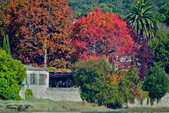 Autumn (Teresa_GM) Tags: autumn trees red green leaves hojas spain corua rboles otoo ra canon550d