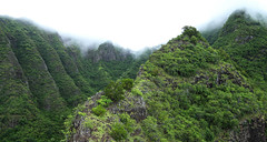 Convergence (Kelsie DiPerna) Tags: mountain mountains green nature beautiful forest hawaii rainforest natural oahu outdoor hiking extreme hike adventure ridge trail tropical mountainside tropics forests mountainscape waianae forested
