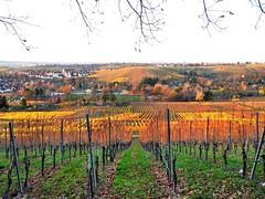 Herbstabend (almresi1) Tags: autumn lines stuttgart herbst vineyards abendsonne rotenberg fellbach untertrkheim badenwrttemberg abendlicht weinberge reihen