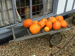 Barrowload (My photos live here) Tags: halloween cousley wood wadhurst east sussex england i phone 5s old vineyard pumpkin all hallows eve road