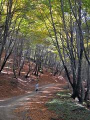 Salendo al monte Fogliano (giorgiorodano46) Tags: november italy rome leila viterbo bosco faggio faggi faggeta fogliesecche monticimini stradanelbosco novembre2015 giorgiorodano