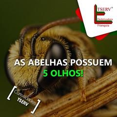 12063640_544403759042268_610160013508223487_n (dedetizadoratservfranquia_tserv) Tags: abelha dengue barata insetos aranha ratos formiga escorpio cupim dedetizadora caixadegua franquiabarata portaiscapararatos
